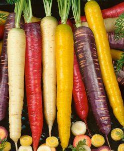 Šargarepe